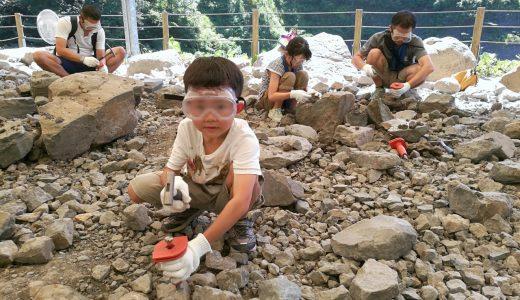 福井恐竜博物館で大人も子供も夢中になれる化石発掘体験を!