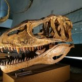 福井恐竜博物館