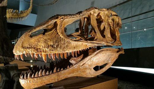小学生と楽しむ福井恐竜博物館。夏休みの混雑状況や気づいた点など